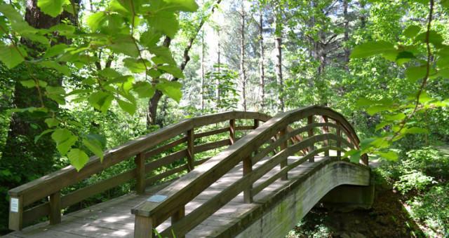 Botanical Gardens Asheville – Painting en plein air
