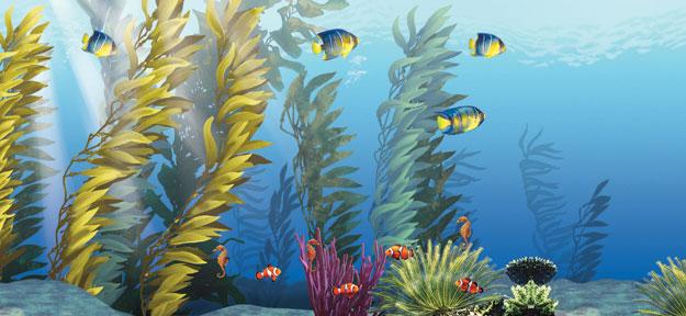 mural  u2013 underwater bliss