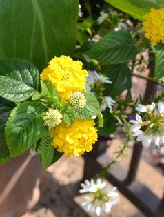 Flower-238