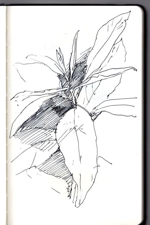 plant-img499