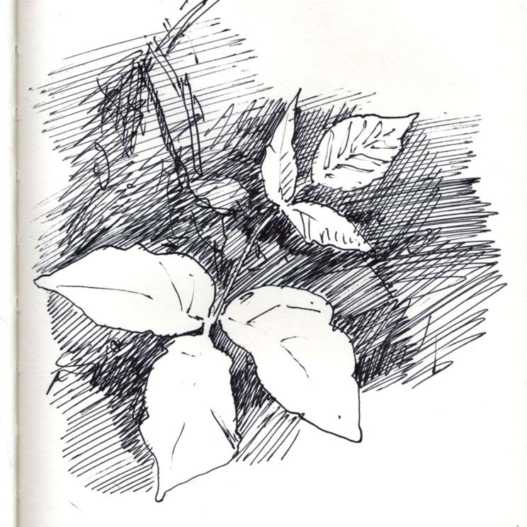 poison-ivy-img500