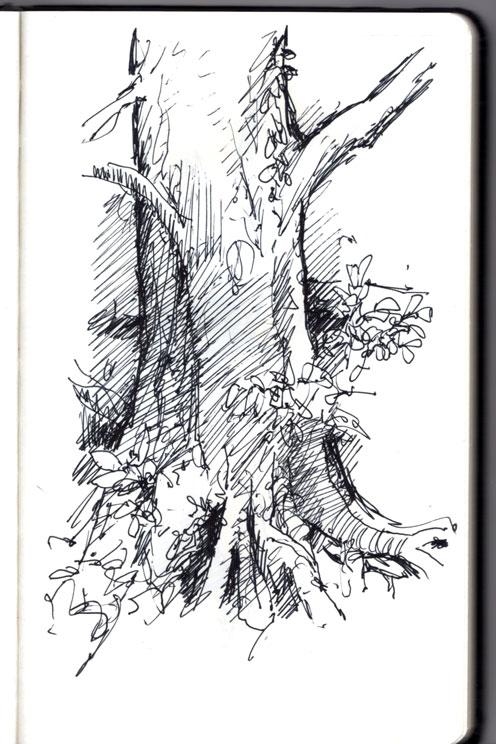 tree-img498