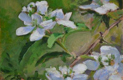 Blackberry Blossoms #2